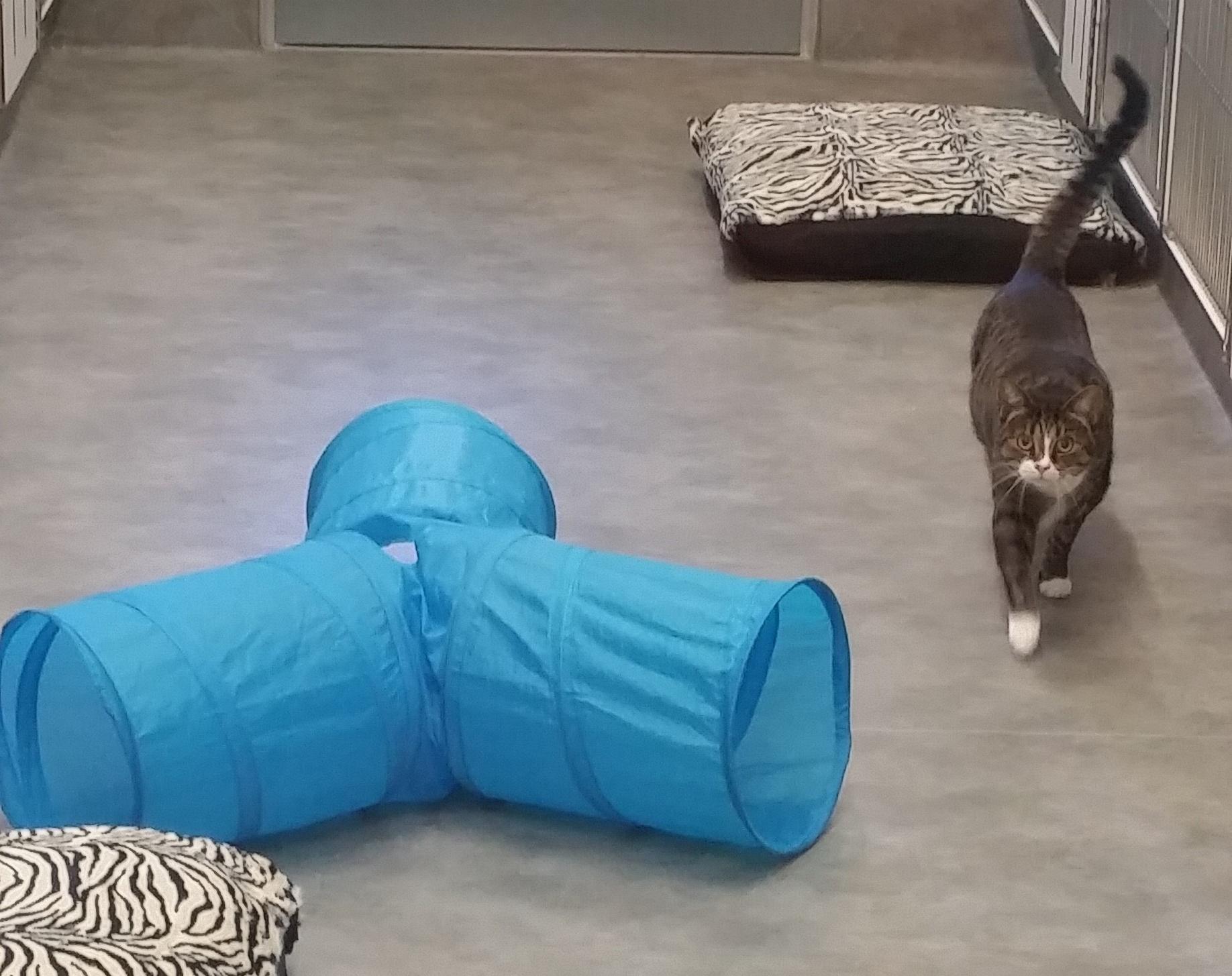 Boarding cat playtime_edited